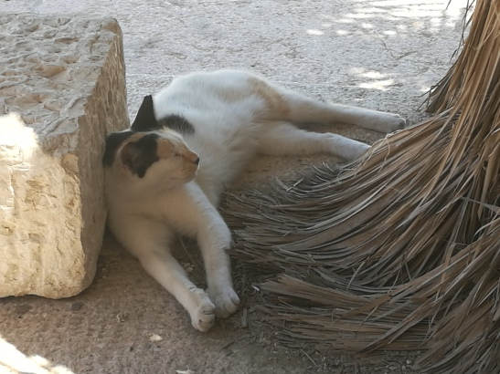 Stray Cat lounging in the shade near the Western Wall